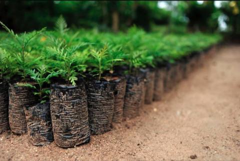 CIAT, NP climate-smart farm 25 via Flickr CC2.0