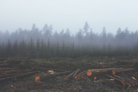 Deforestation, free photo via pixabay CC0